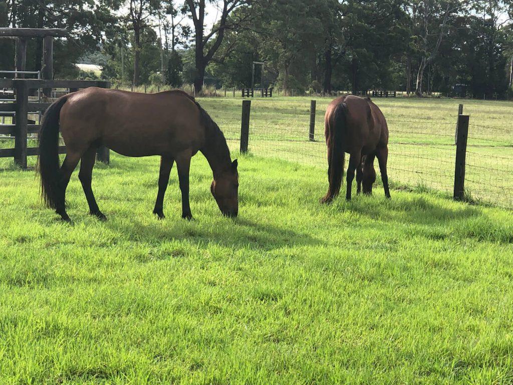 photo of photo of MHT horse agistment area outside paddock